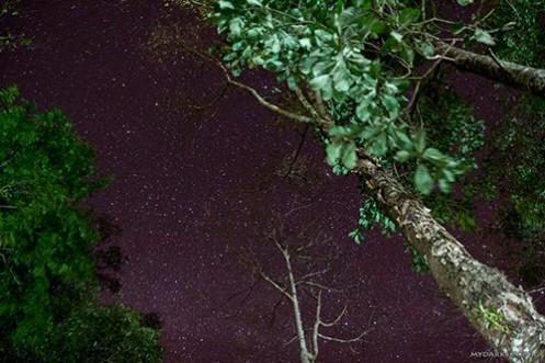 1211-11Stars_Trees-I8627_500